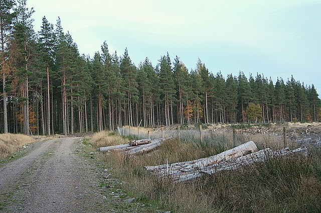 An eastbound track through Airdrie plantation.