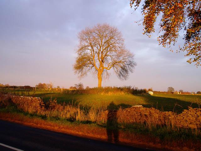 Tree at Crackstone