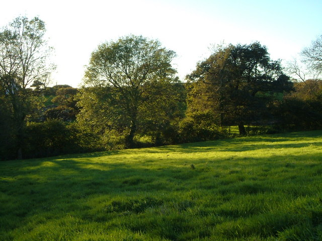 Trees at Hingston Borough