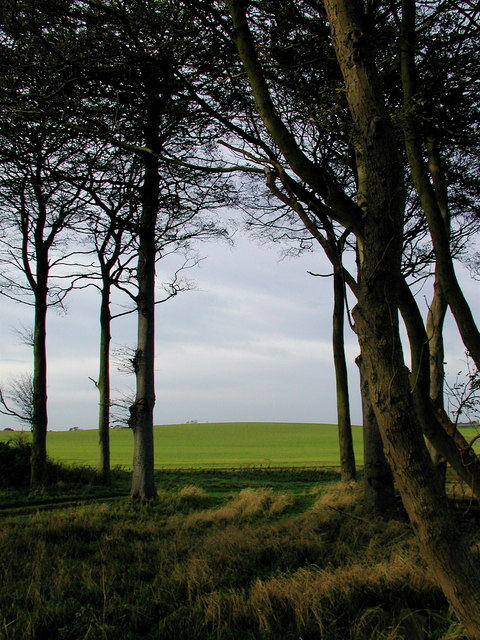 Hoggart Hill, Humbleton
