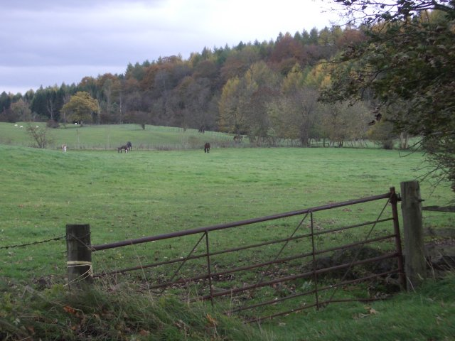 Horse field, Auchenbowie