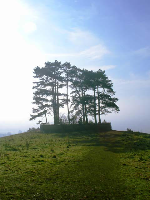 Battle of Waterloo Trees on Wotton Hill