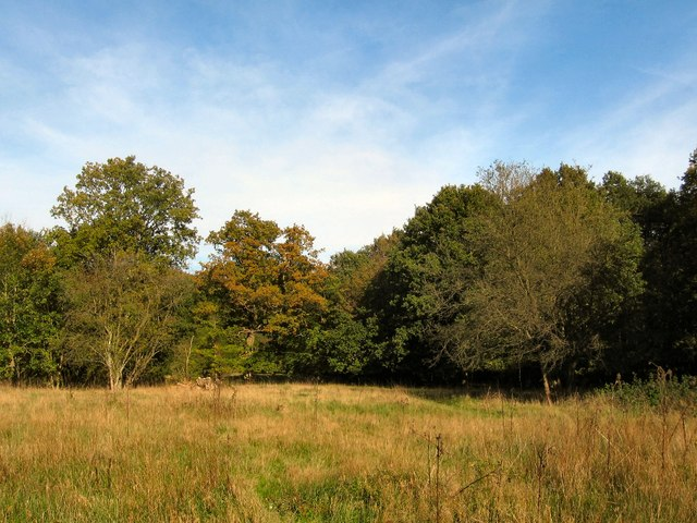 Clearing in Danemead Nature Reserve