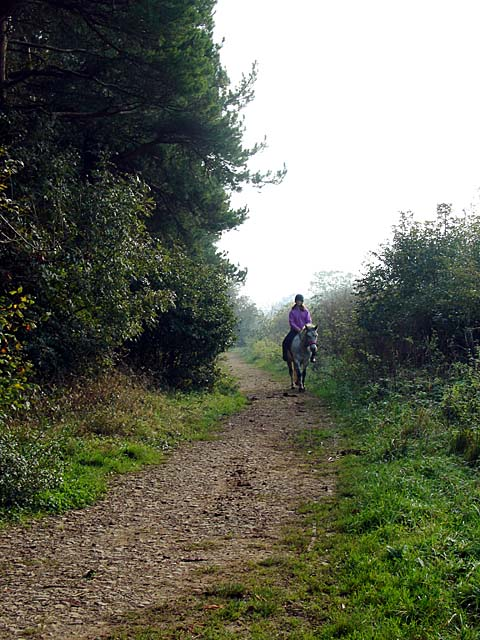 Bridlepath along the side of Westridge Wood.