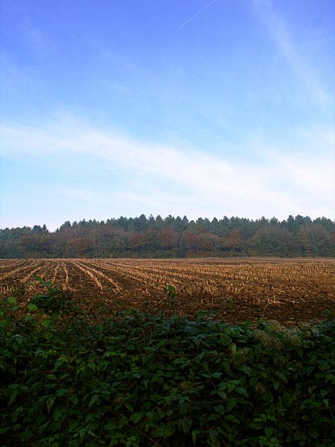 Looking across to Westridge Wood