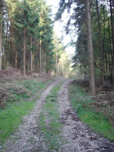 Track near Holly in Chase Woods