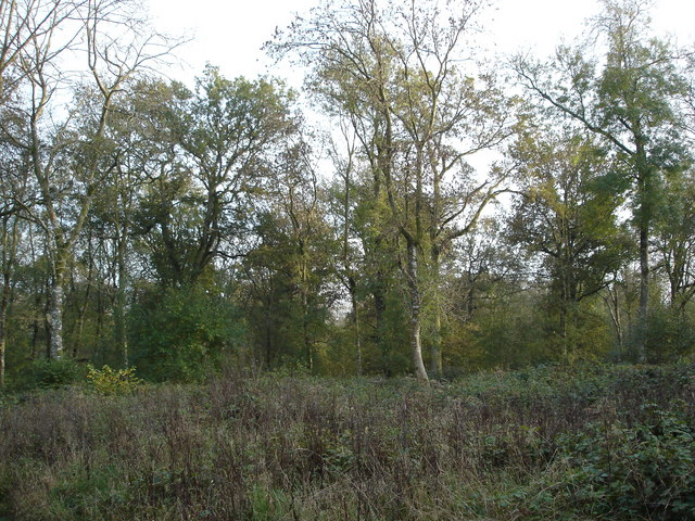 Woodlands and brush in Bridmore Green