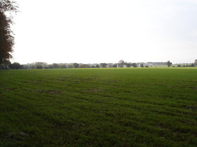 Field on Higher Bridmore Farm