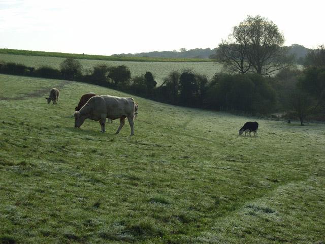 Pastures, Westbrook