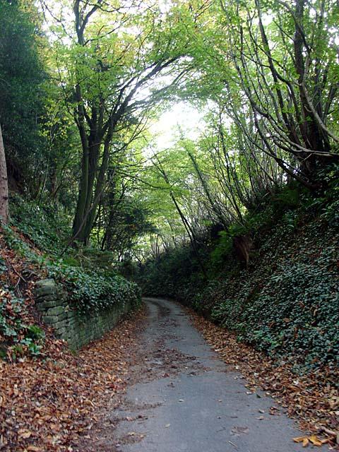 Lane leading to Coombehall Farm