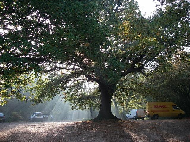 Camelot Car Park, Hainault Forest