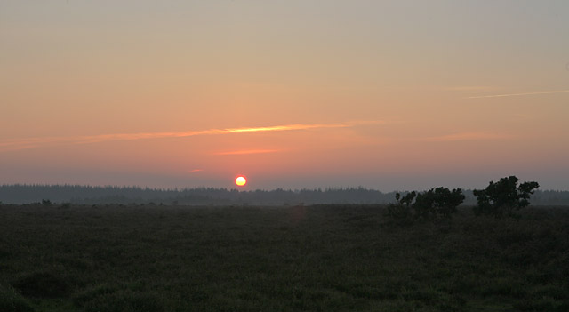 Sunset over Slufters Inclosure, New Forest