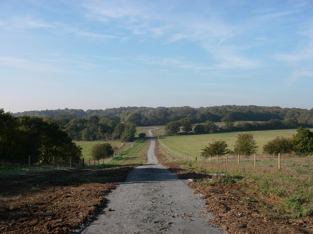 New track into Hainault Forest