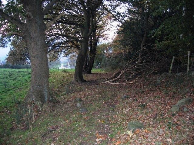 Ancient track near Bridge End, Caergwrle