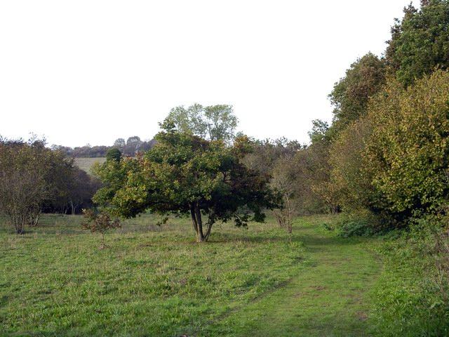 Eastern part of Stockbridge Down