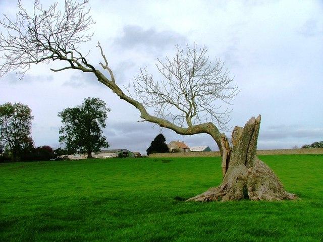 Field Near Middridge Grange