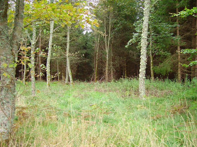 Forest, Craggan
