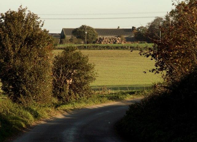 View of Roydon Hall Farm from Primrose Lane