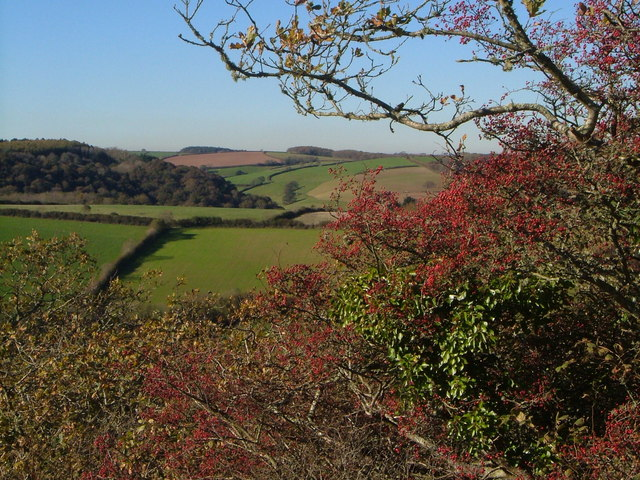 Haws near Butland Wood
