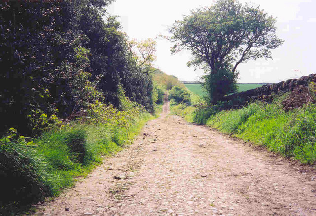 Codlaw Hill - old Roman Military Road