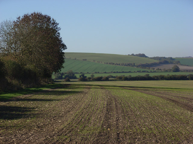 Farmland near Collingbourne  Kingston