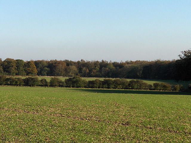 Farmland, Wick Down