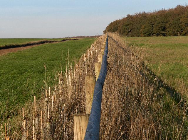 Gallops on Sunton Heath