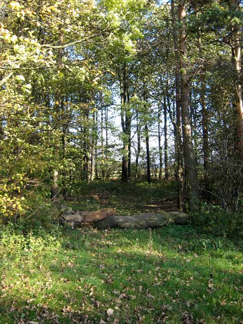 Wood near Watlass Moor