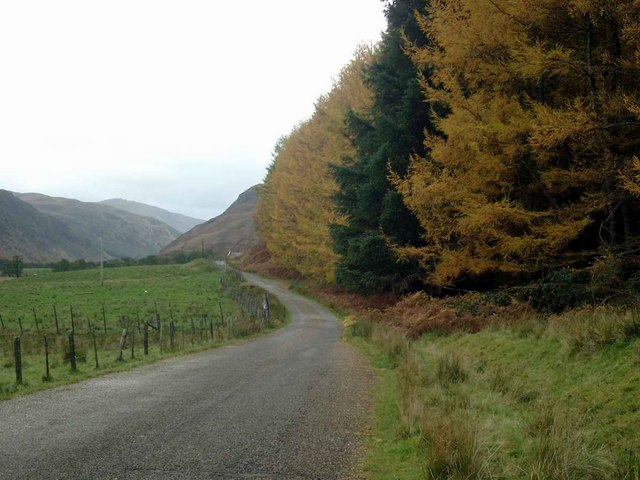 The larches turning in Strathconon