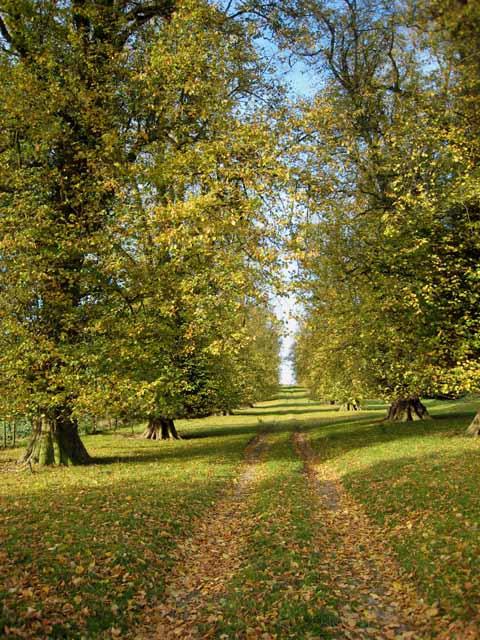 Avenue of elms