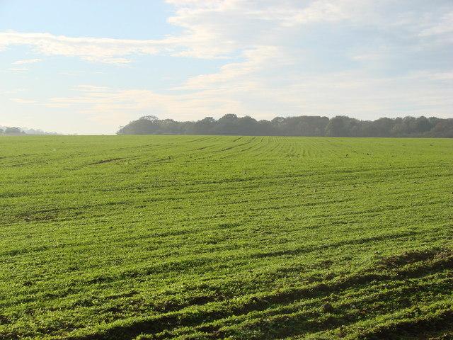 Kirkdike Plantation,   from Stapleton Park