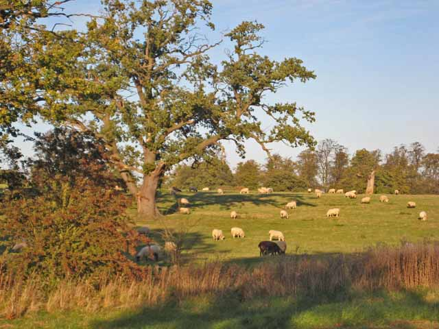 Pasture on the Snape Castle estate