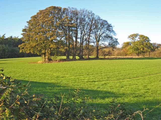 Field with trees on the Snape Castle estate