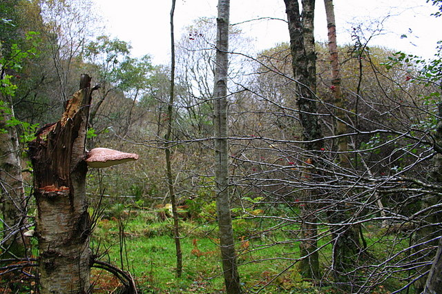"Nature reclaims the ""dry"" loch."