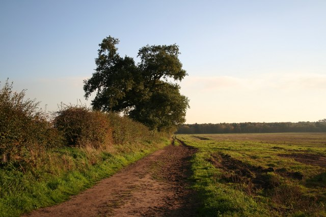 Spruce Walk