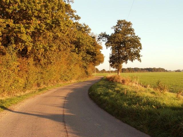 Late autumn sunshine on Stonehall Lane