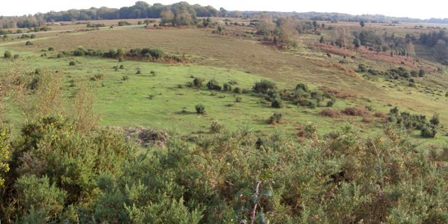 Panoramic view from the highest point of the New Forest