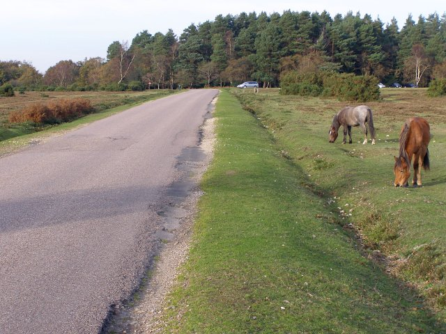 Road to Nomansland, Pipers Wait, New Forest