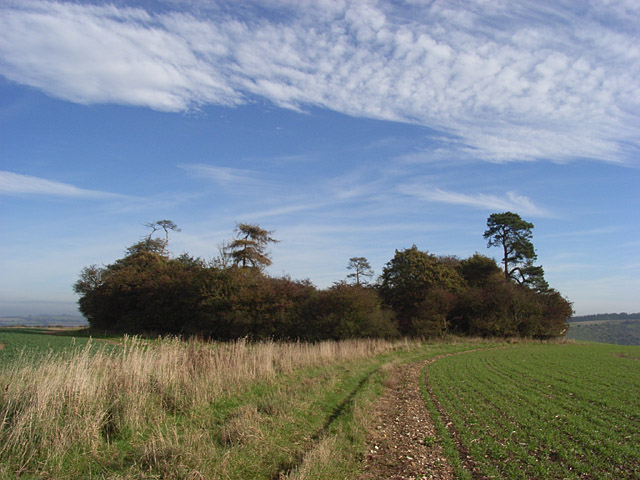 Copse, Down Barn