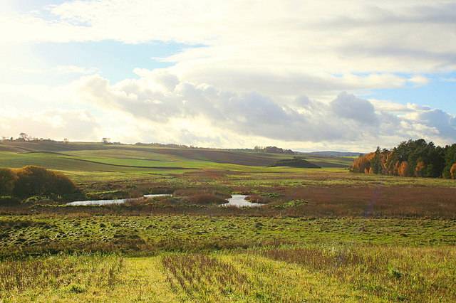 The richness of the boglands.
