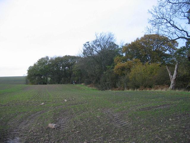 Footpath and farmland leading to Nunriding Moor