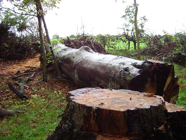 Strip wood, Edrom