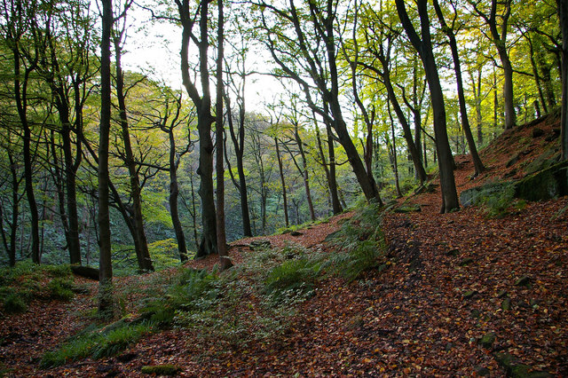 Foster Wood, Colden Clough