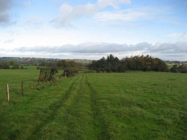 Woods near Winsley Hall Farm