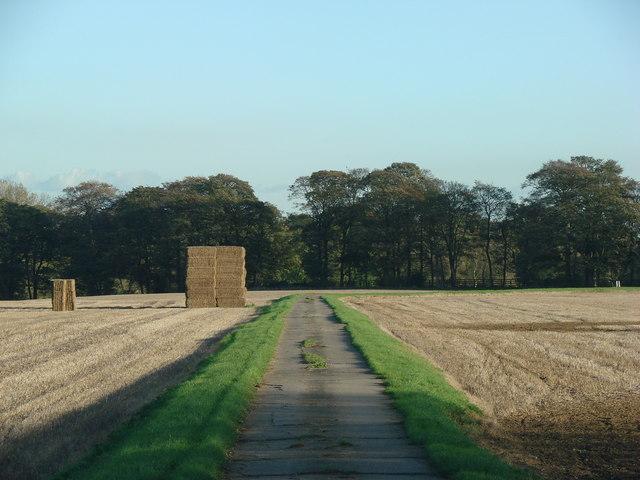 Track to Burghwallis Grange from Robin Hood's Well.