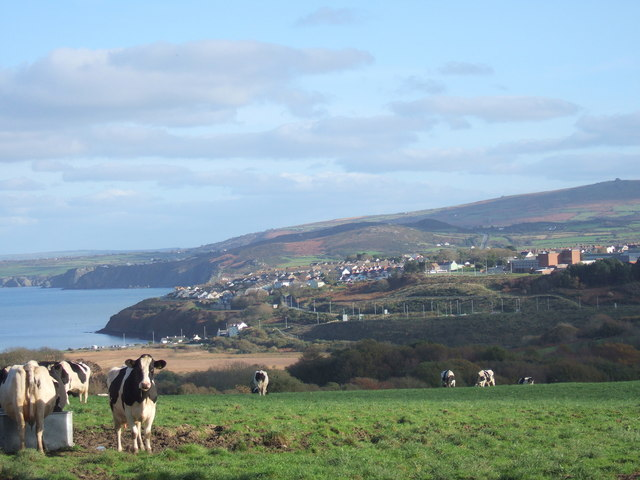 Pastureland  above Wdig/Goodwick
