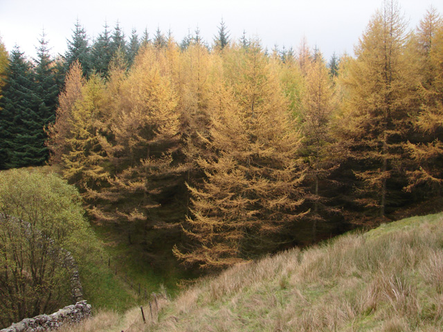 Forestry at Mossy Bottom