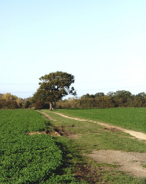 Footpath from Bradwell Road to Maldon Road, Tillingham