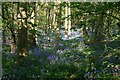 TL2654 : Bluebells in Waresley woods by d brewerton