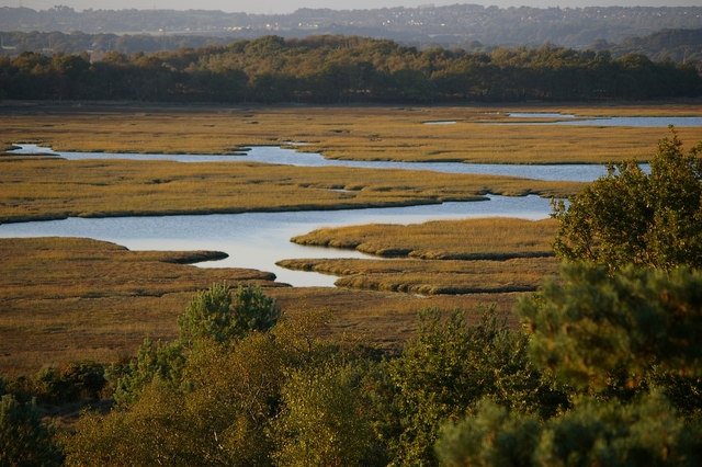 Saltmarsh at  Arne Nature Reserve